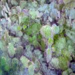 «PAYSAGES MEDITERRANEENS»80/60 peinture sur photo