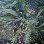 « PAYSAGES MEDITERRANEENS »80/60, peinture sur photo